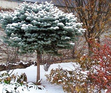 téli kert4