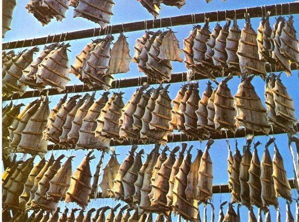 Lutfisk skanna0001