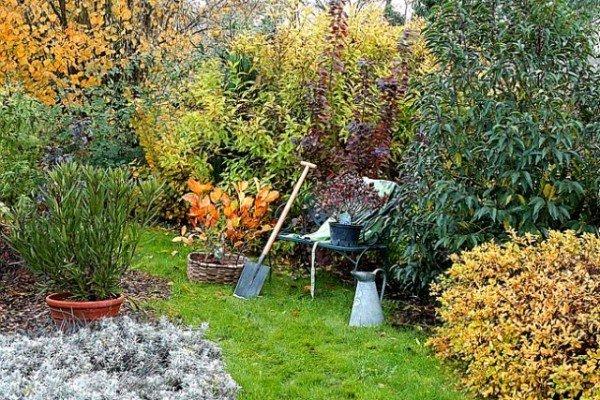 planter-automne-arbre-arbuste-l650-h474-c-600x400