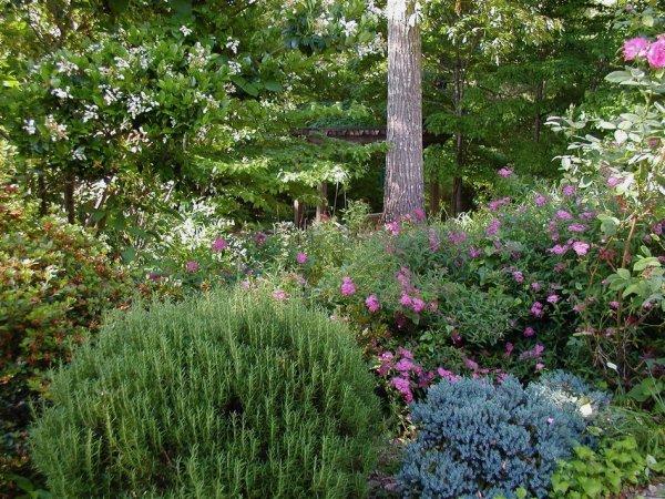 shrub border by patio May 2010