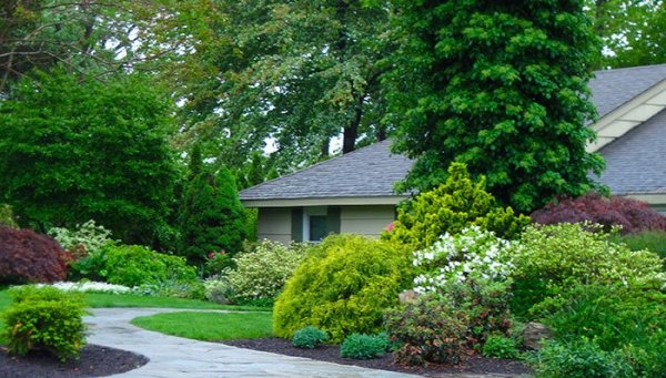 what-shrubs-can-do-for-your-garden-northeast-hero
