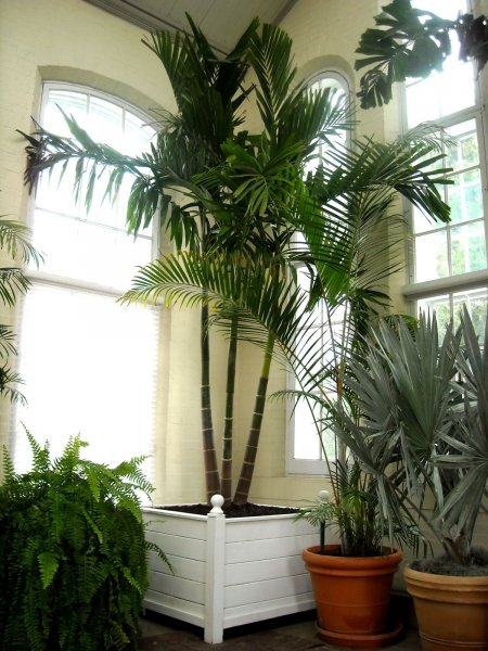 house-plants-small-apartments-non-toxic-house-plants-for-cats