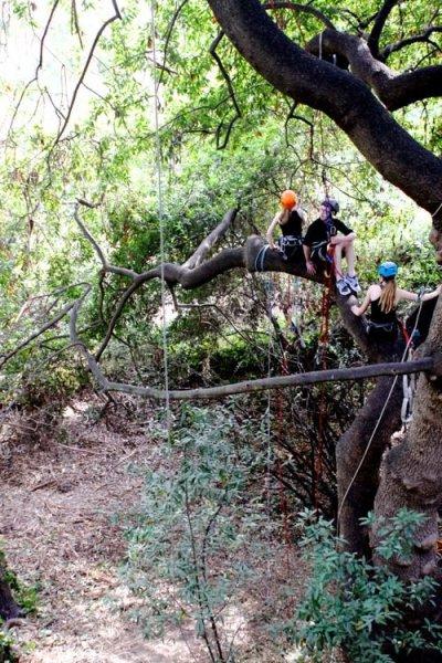 Tree-Climbing3