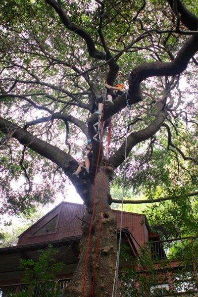 Tree-Climbing4